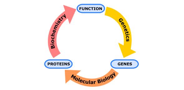 Trivia Quiz On Molecular Biology Exam!