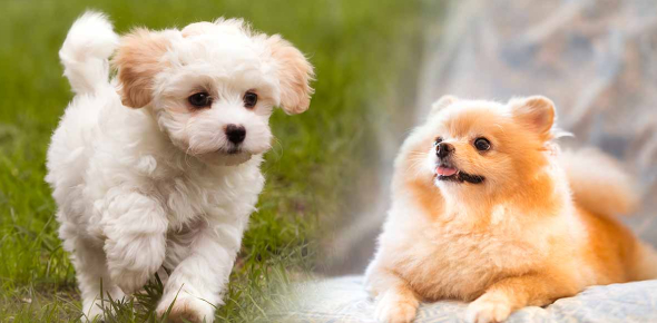 What Small Dog Breed Should You Get?