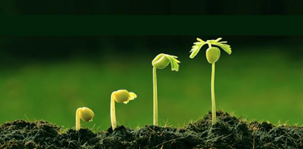 12-bio-botany-unit-I Taxonomy Of Angiosperms