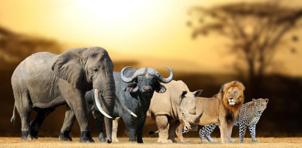 Wild Animals: Identify The Image! Trivia Quiz
