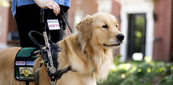 Service Dog Quiz