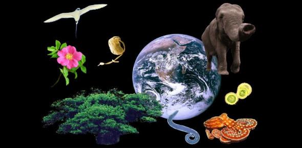 AP Biology Test #1 Ecology, Plants, Animal Behavior