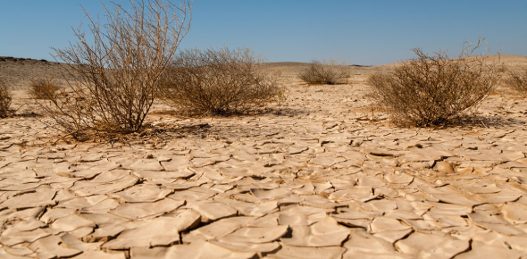 How Much Do You Really Know About Desertification? Trivia Quiz
