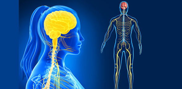 NCLEX Practice Test For The Neurological System