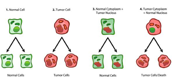 Neoplasia And Carcinogenesis Questions! Quiz