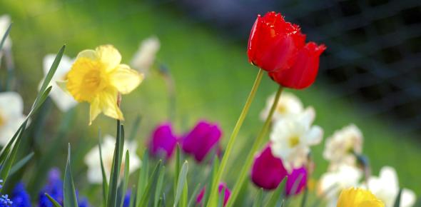 Interesting Trivia On Flowers! Quiz