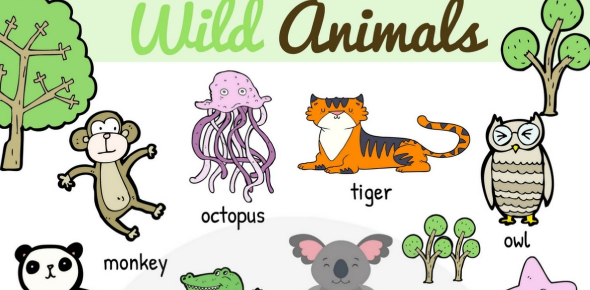 Wildlife Vocabulary Quiz: Test!