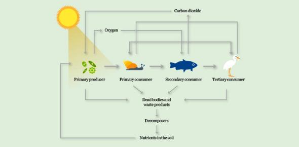 Photosynthesis, Food Chain, & Ecosystem Quiz