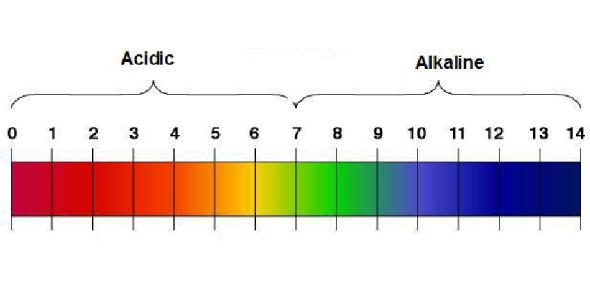 Acids And Alkalis Quiz! Chemistry Trivia