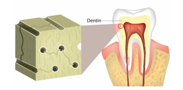Dental Histology Hardest Exam: Quiz!