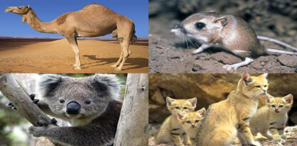 Which Animal Are You Quiz!