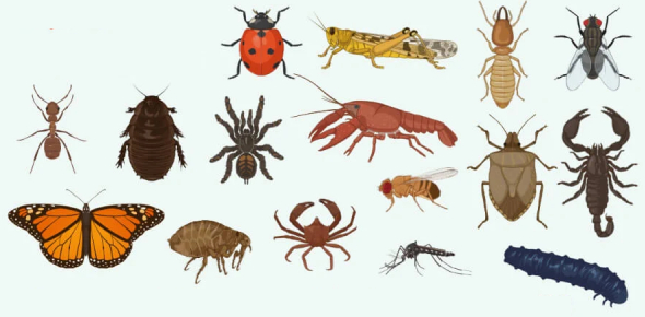 Types Of Arthropods Quiz: Trivia!