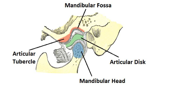 Trivia Quiz On Temporomandibular Joint!