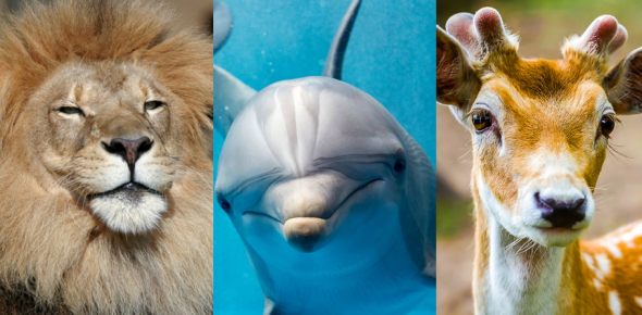 Quiz: Which Animal Traits Matches Your Personality?