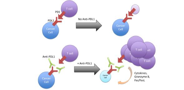 A Quiz On Cancer Immunology