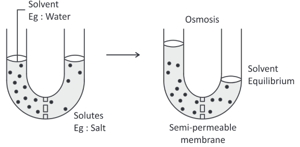 Cell Membrane And Transport Quiz: MCQ Test!