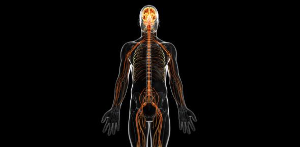 Central Nervous System: Basic Test! Quiz