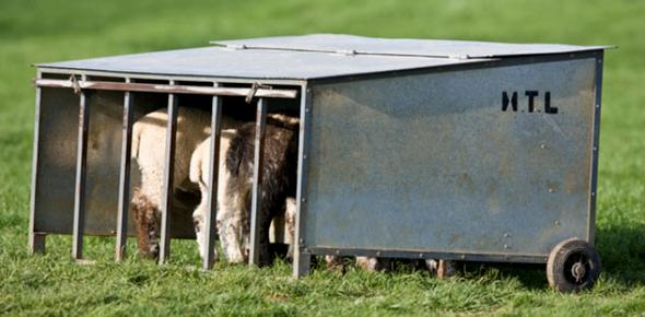 Livestock Equipment Identification: Quiz!