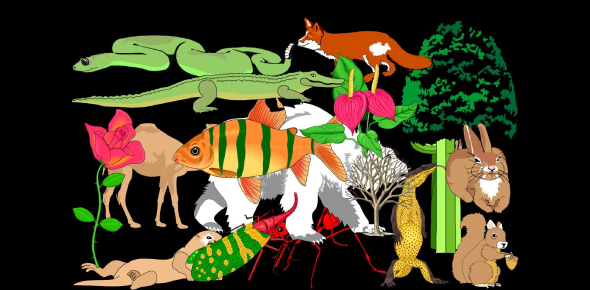 Quiz: Animal Variation And Classification! Trivia Questions