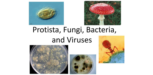 Quiz: Viruses, Bacteria, Protists And Fungi! Trivia