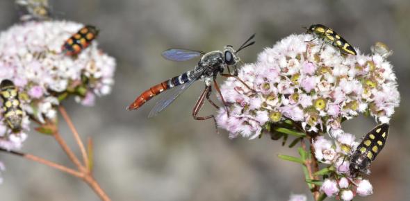 Entomology Quiz! Hardest Practice Test! Trivia
