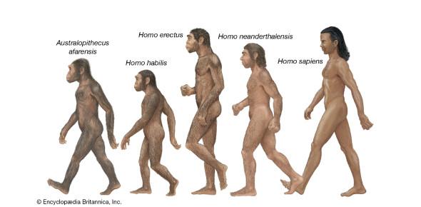 Trivia Quiz On Early Human Development!