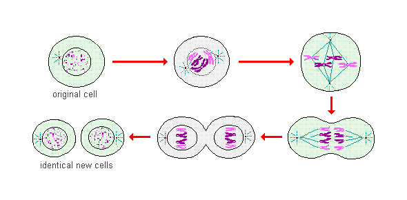 Biology Quiz: Sex Cells And Heredity