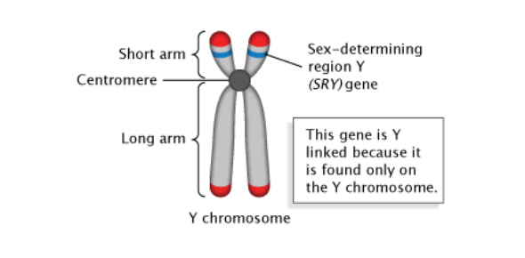 Biology Quiz: The Genetics Of Sex