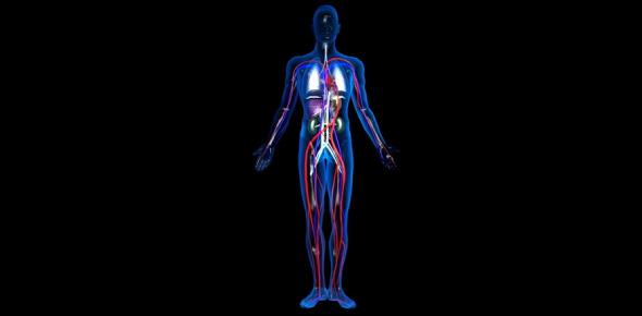 The Human Body Ultimate Quiz! Trivia