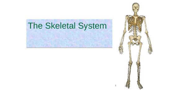 Trivia: Skeletal System Ultimate Test!