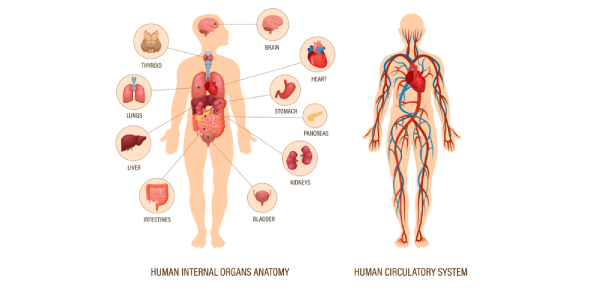 Anatomy And Physiology Of Heart! Quiz