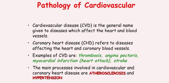 Cardiovascular Pathophysiology Exam: Quiz