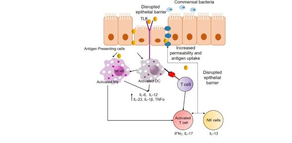 Pathophysiology Of Inflammation Quiz! Trivia