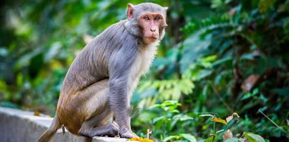 Monkey Trivia Facts: Ultimate Quiz