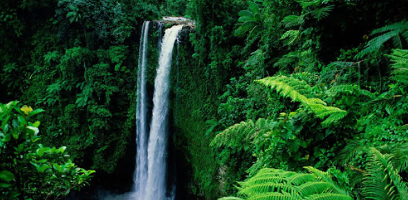 Rainforest Trivia: How Much You Know? Quiz