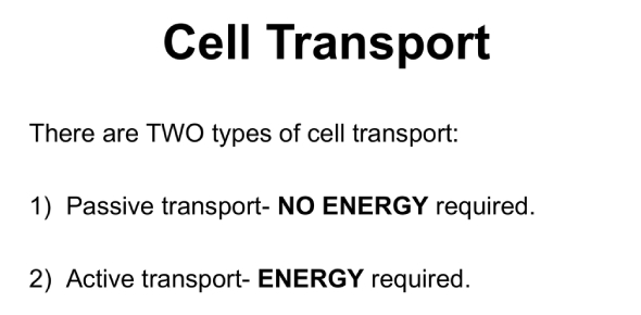Cell Transport And Energy Quiz! Trivia