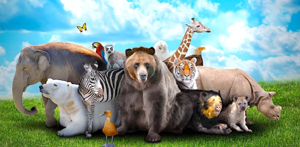 Everything You Should Know About Animal! Trivia Quiz
