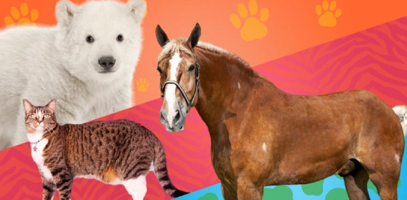 Take The Hardest Trivia Questions On Animal! Quiz