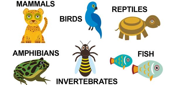 Take The Animal Basic Trivia Test! Quiz