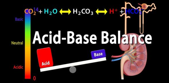 Nursing Quiz: Acid-base Balance Test!