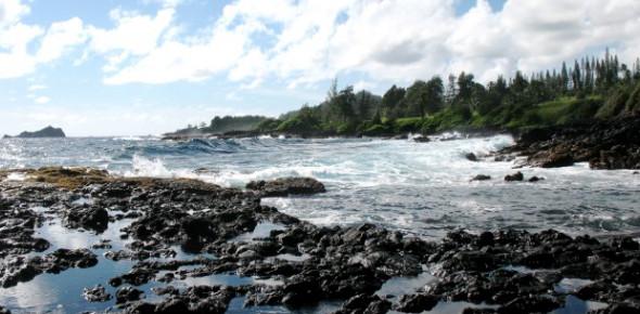 Intertidal Zone Quiz: Trivia!