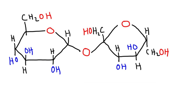 Disaccharides Trivia Facts: Quiz!