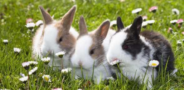 What Breed Of Rabbit Are You?