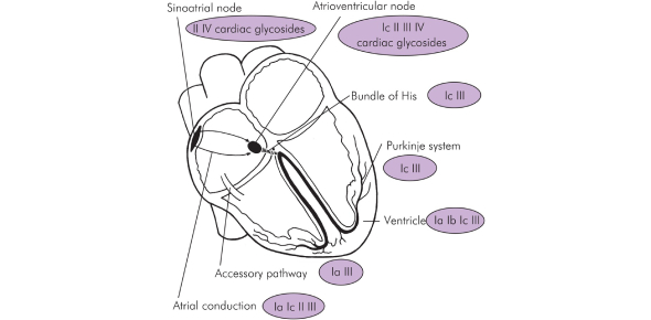 Cardiac Pharmacology Practice Test: Quiz!