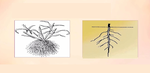 Monocot And Dicot Quiz: Can You Identify?