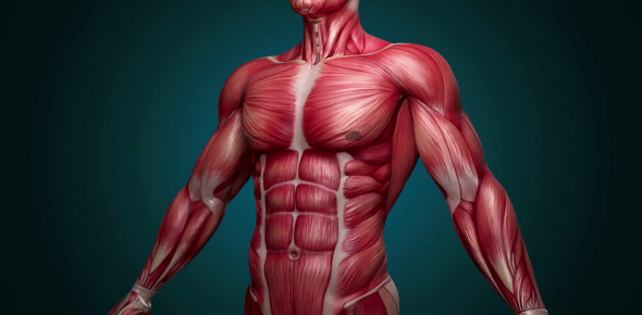 Quiz On Human Body: MCQ!