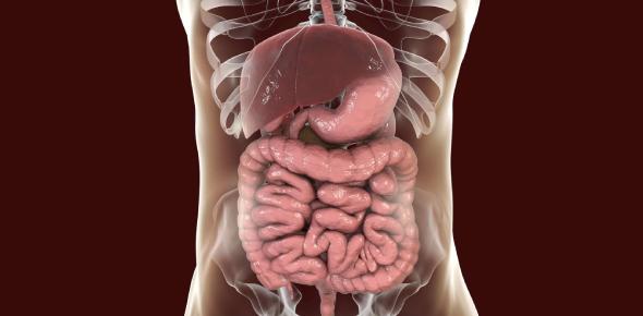 Digestive System Quiz: MCQ! Exam