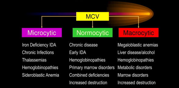 Microcytic And Normocytic Anemia: Quiz!