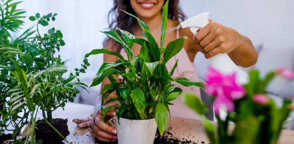 Plants Quiz: Ultimate Questions! Trivia