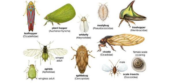Insect Orders Quiz: Trivia! MCQ